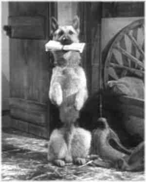 Bullet The Wonder Dog from The Roy Rogers TV Show