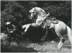 Roy Rogers' horse Trigger fights off a bad guy